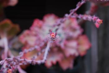 南房パラダイスの花1.58MB .jpg